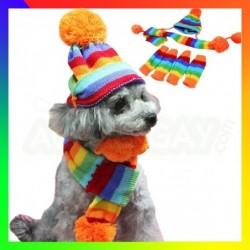 Tenue rainbow pour chien
